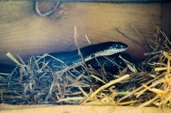 Big snake above!