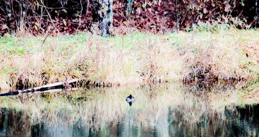 on the pond . . .
