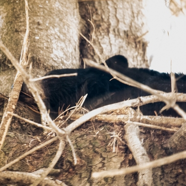 flattened out: hiding!