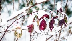 snowlefs